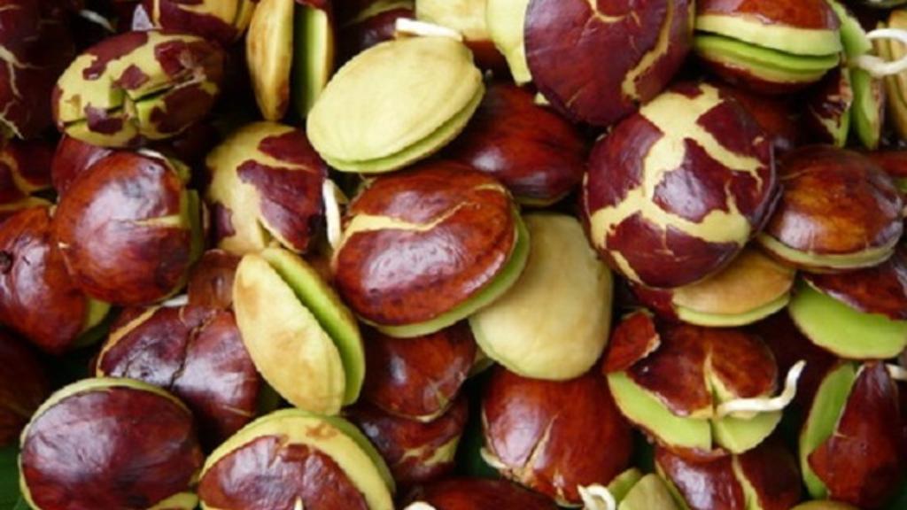 Manfaat Jengkol Untuk Diet Sehat