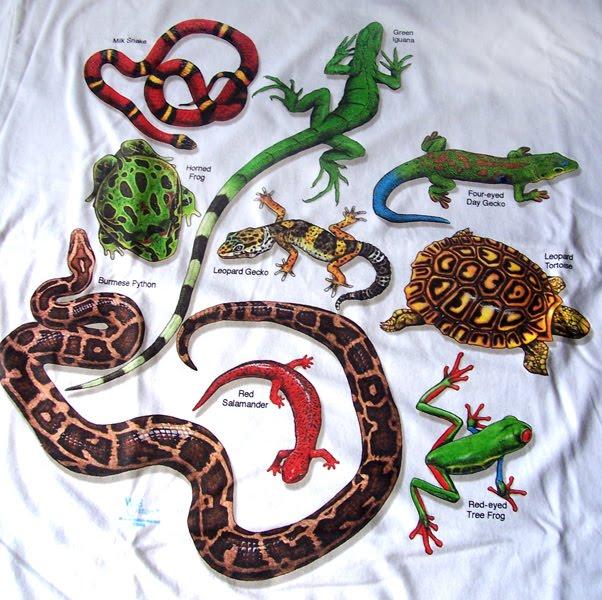 Hobi Reptile Mulai Merambah Di Indonesia